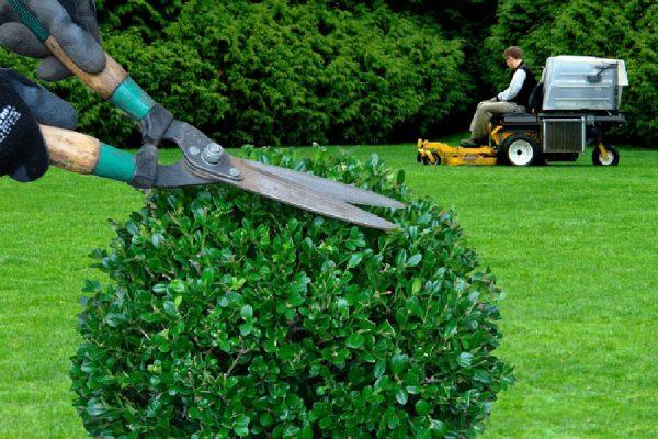 Espaces verts : faites appel à un professionnel