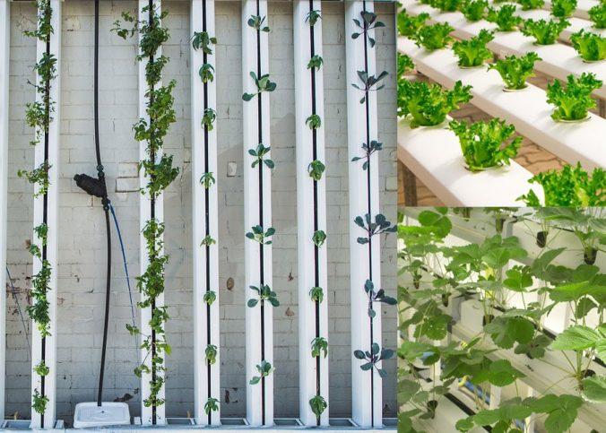 hydroponie-jardin-appartement